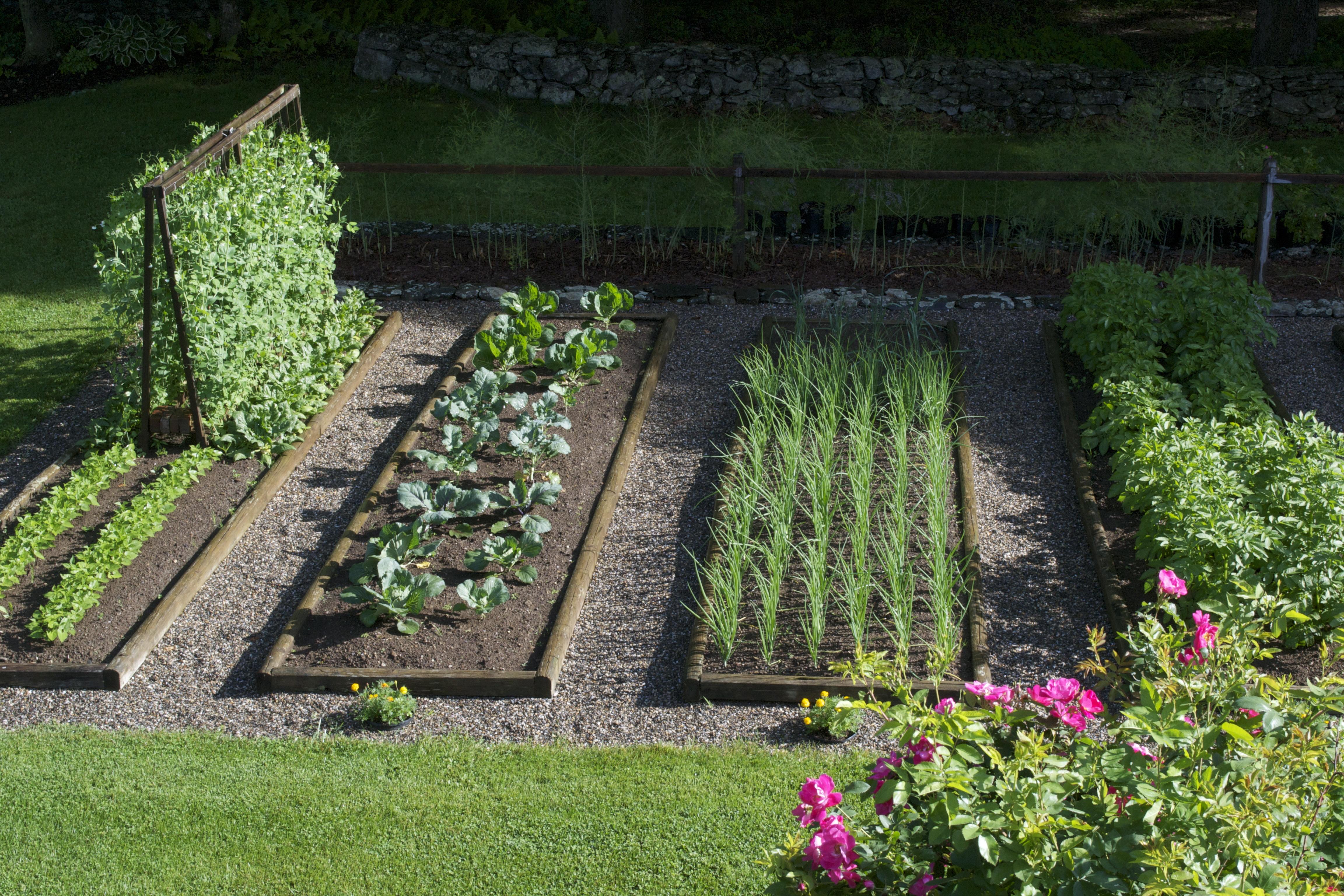 Огород для начинающих своими руками фото