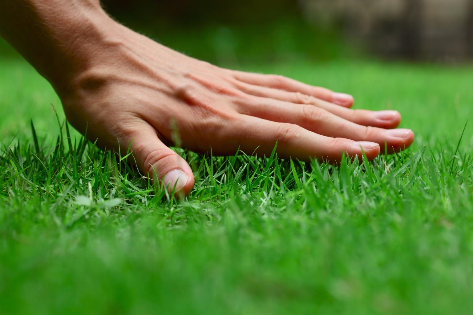 Доступный и красивый рулонный газон