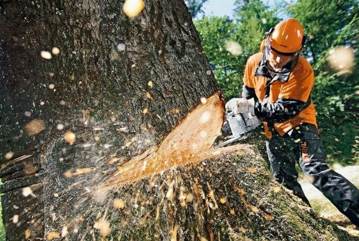 Цены на удаление деревьев в Москве и МО
